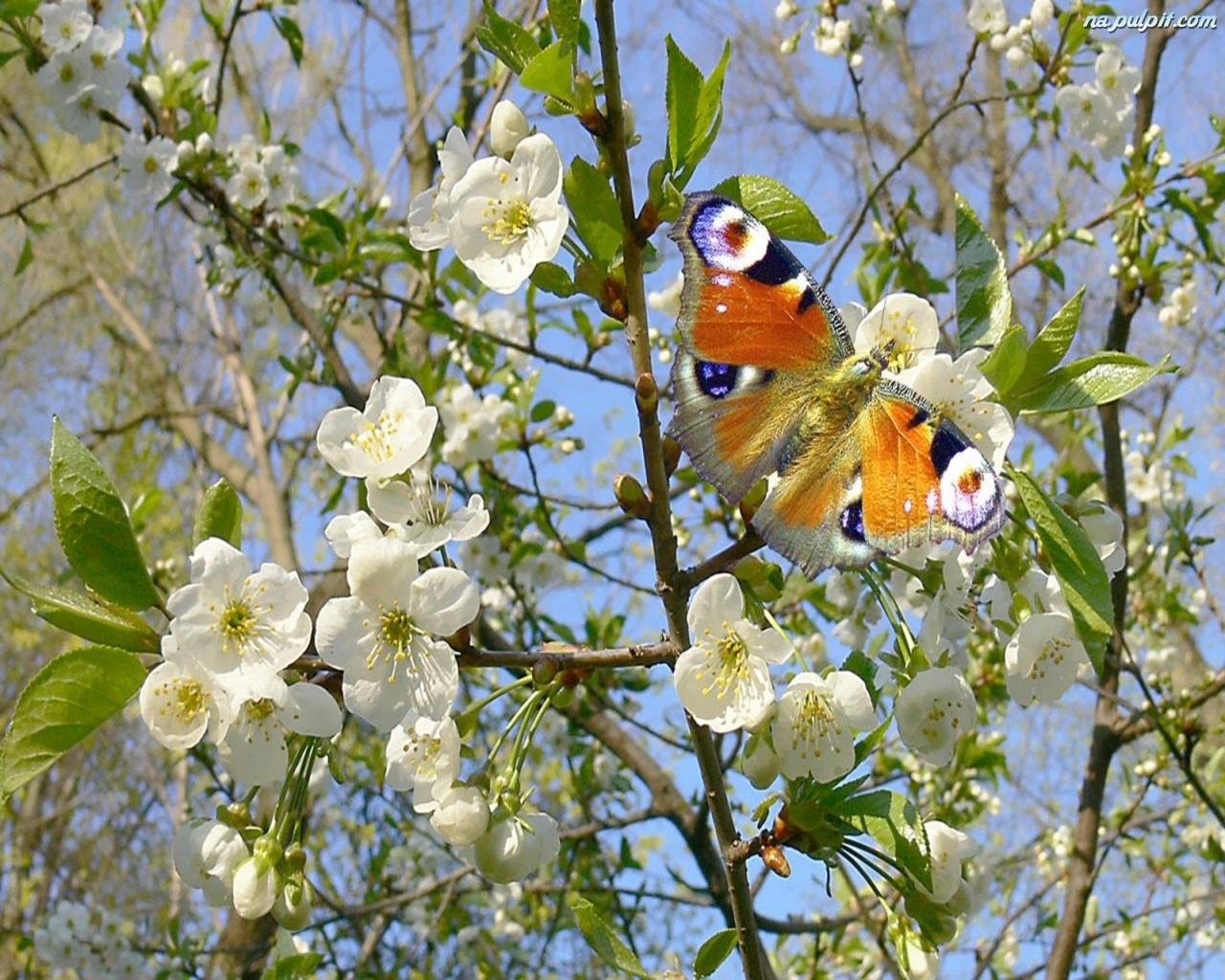 Фото на рабочий стол весна природа  DreemPicscom